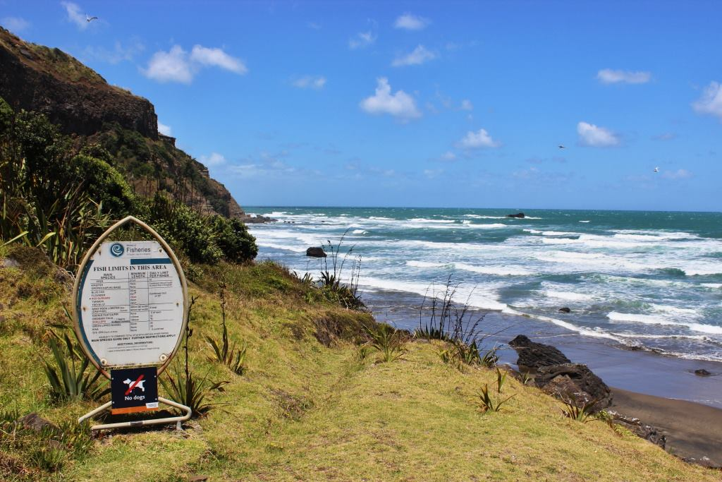 muriwai-beach-new-zealand