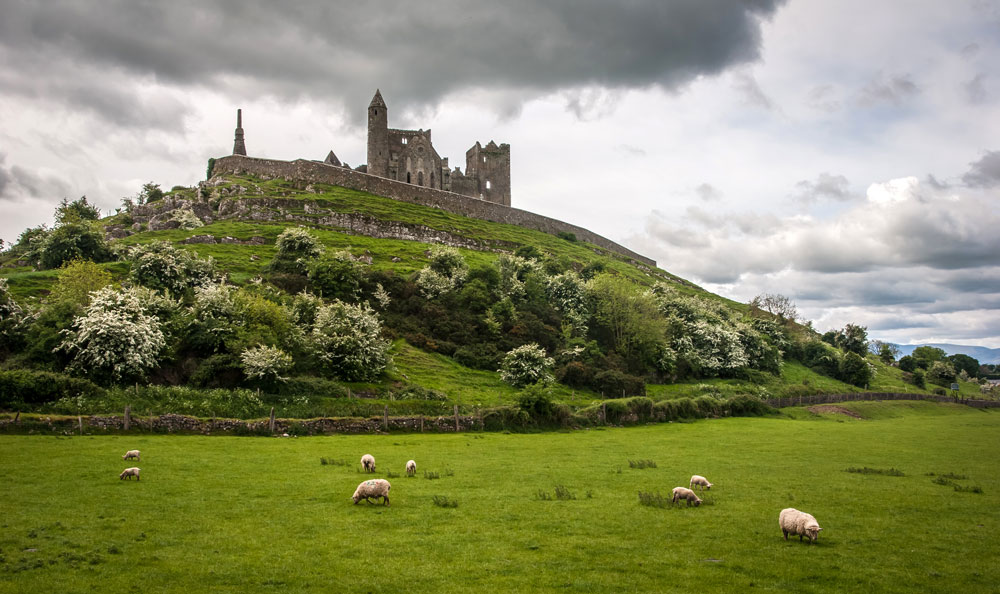ovecky-rock-of-cashel-irsko